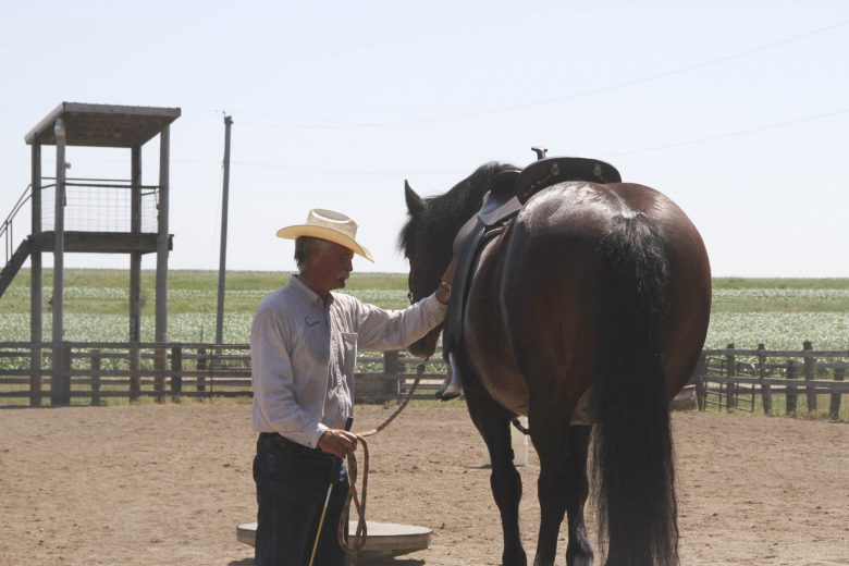 Save Your Tail While Horse Shopping