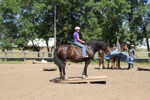 Dennis Auslam Horse Trainer